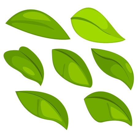 Leaf Stock Vector - 12125470