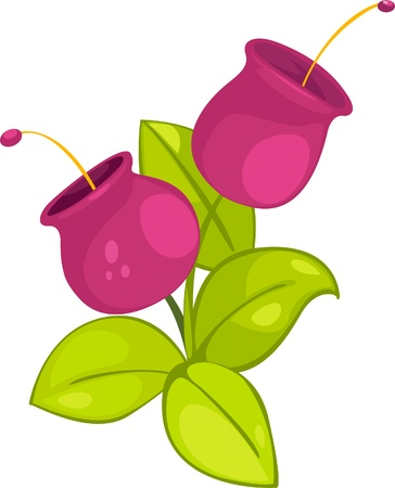 rose bush: illustration plant and flower  Illustration