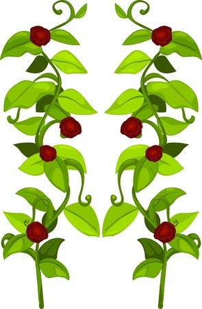 illustration plant and flower  Vector