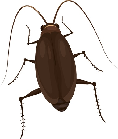 illustration Cockroach  Vector