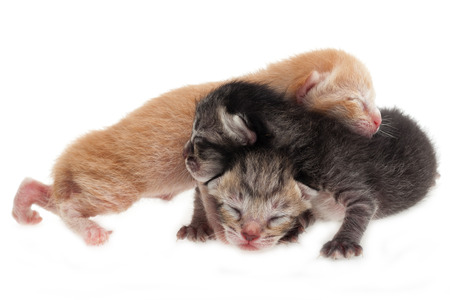 New born cat family isolated on white background