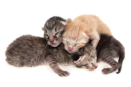 New born kittens on white background photo