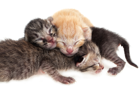 New born baby cats on white background photo
