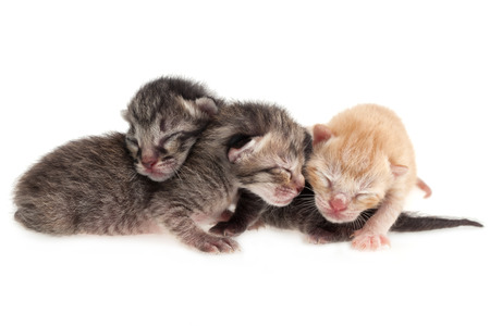 Baby cats on white background photo