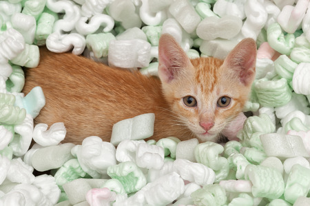 fillers: Kitten playing in box of packing fillers