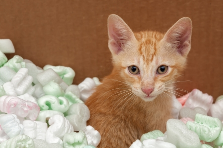 fillers: Kitten playing in box with packing fillers