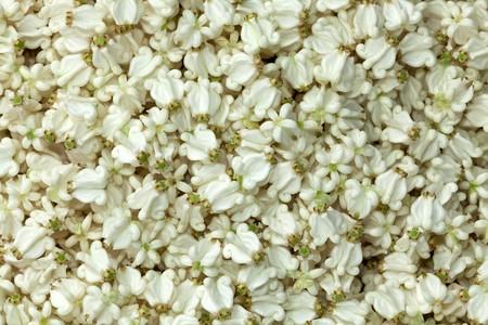 festoon: Crown flower prepared for making Thai festoon