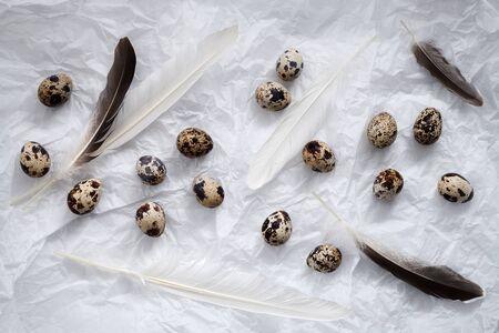 granja avicola: huevos de codorniz en plano la naturaleza muerta Foto de archivo