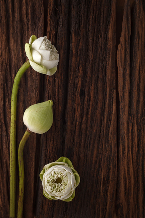 green lotus flower decoration on wooden background beautiful flat lay still life rustic symbol of buddhism