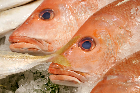 The close up of fresh red snapper fish on ice at fish market. Reklamní fotografie