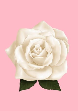 The Digital Painting of White Rose isolated on Pink background in Semi-Realism 3D illustration style. Фото со стока