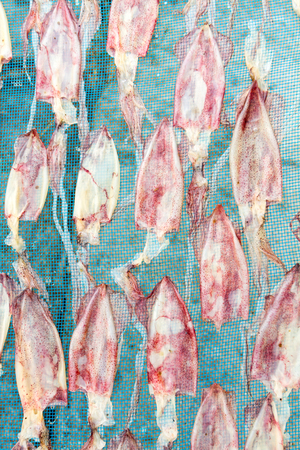 squid: Sun Dried Squid, The traditional drying Squid in fishing village in Thailand Stock Photo