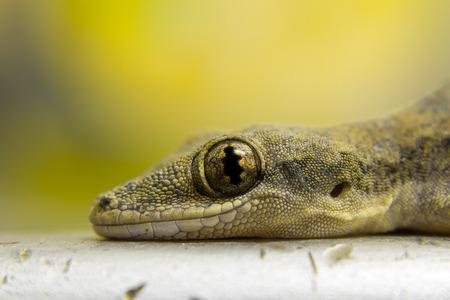 close up: Close up lizard eye