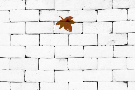 sorted: Brown maple leaf painted on sorted white brick wall Stock Photo