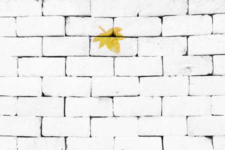sorted: Yellow maple leaf painted on sorted white brick wall Stock Photo
