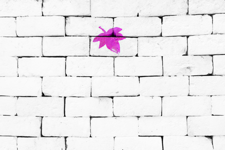 sorted: Purple maple leaf painted on sorted white brick wall Stock Photo