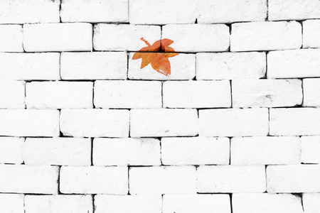 sorted: Orange maple leaf painted on sorted white brick wall Stock Photo
