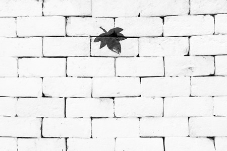 sorted: Black maple leaf painted on sorted white brick wall