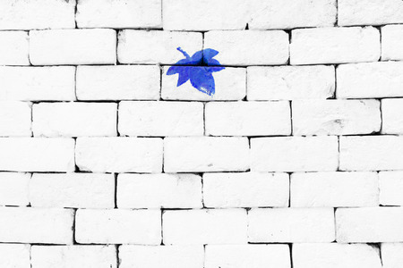 sorted: Blue maple leaf painted on sorted white brick wall