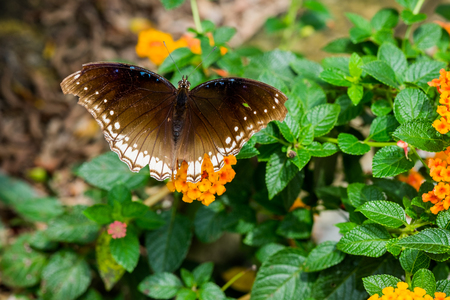 Beautiful butterfly with tree in background