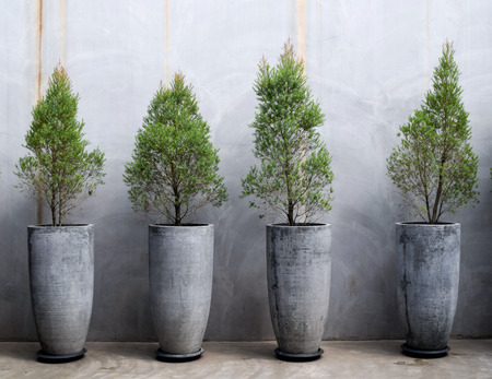 Cement wall decoration with small trees in pot plant, Modern house decoration tall concrete pots