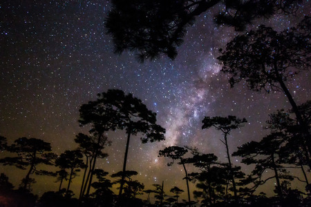 over black: Noised Milky way and silhouette of pine trees in thailand