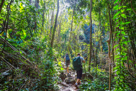 adventurers: Tourists hiking in the deep jungle , Thailand