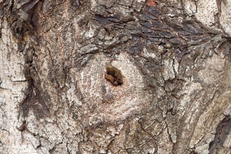 tree texture: The original wood texture on the big tree Stock Photo