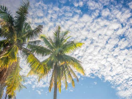 cana: Tropical sky with coconut tree