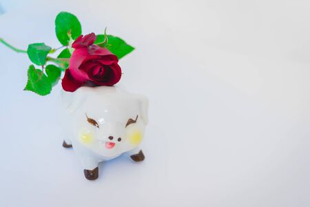 A funny piggy bank with a red rose on white background