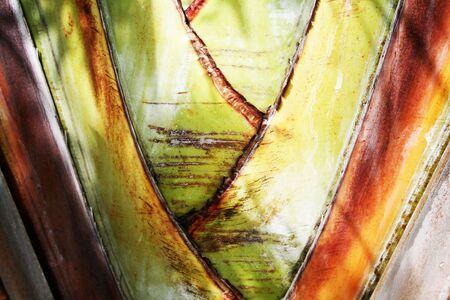 palmtree: Curacao Palmtree