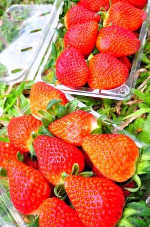 Fresh red strawberries photo