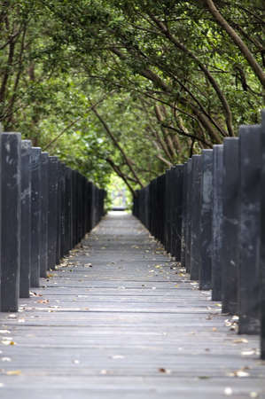 Mangrove forest Boardwalk Stock Photo - 14868881