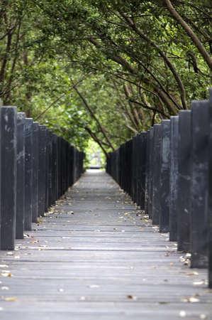 Mangrove forest Boardwalk Stock Photo - 14868881