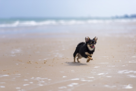 Dog playing at the beach  photo