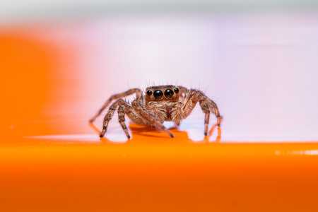Super macro spider portrait photo