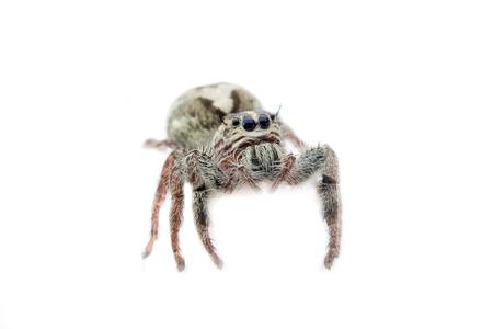 arachnoid: Super macro small spider portrait