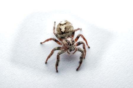 arachnoid: Super macro ragno ritratto