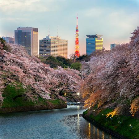 cherry blossom park in spring shidorigafuji tokyo
