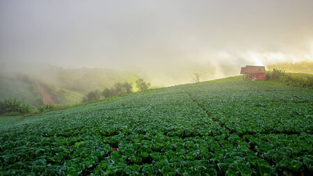 Natuer hill in morning photo