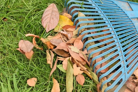 blue rake on grass