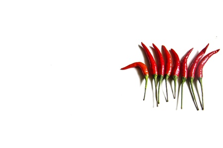 red chilli pepper plant: Red hot chili peppers on white background