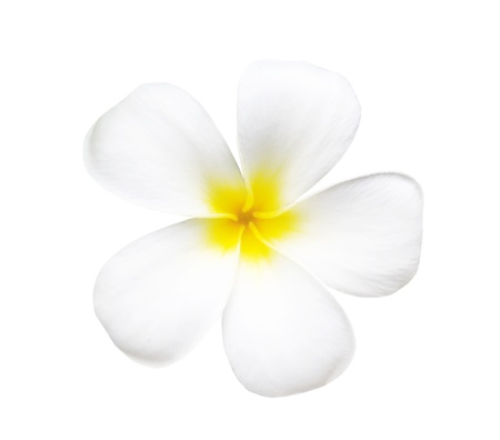 frangipani flower isolated on white , with clipping path photo