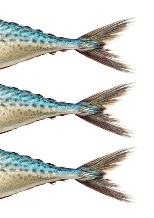 Mackerel  on white background , with clipping path Stock Photo - 21933049