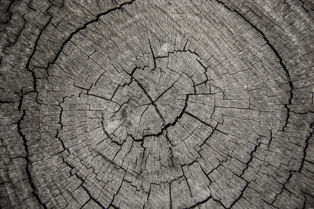 Section of old tree , old wooden background and texture photo