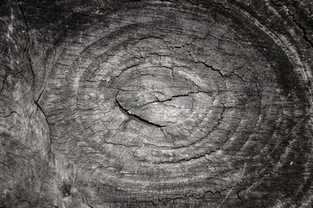 Section of old tree , old wooden and texture photo