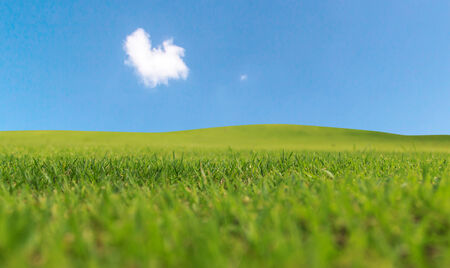 Green grass and blue sky photo