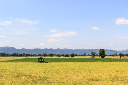 rice field with shack on mountain background photo