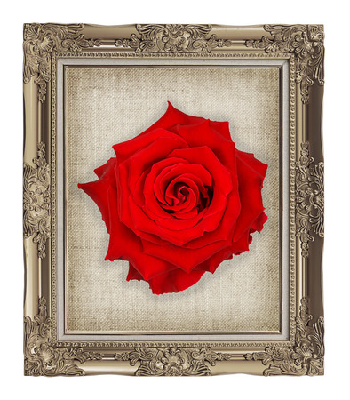 red rose on golden frame with empty grunge linen canvas  beautiful vintage background photo
