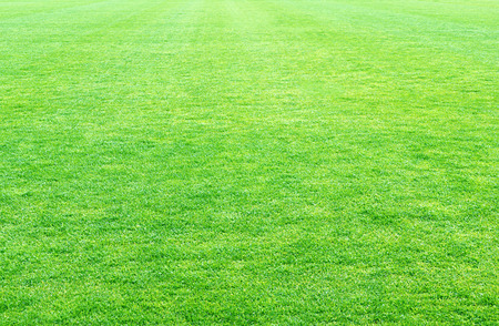 green lines: fresh spring green grass, green grass texture or background. Stock Photo